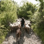 TORTONA STORIES - Vallenostra